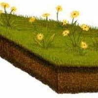 Byron Shire (NSW) to get a natural burial ground