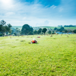 Burnie Council presented with petition about green burial