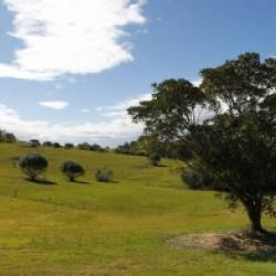 NSW Independent Planning Commission clears way for 136,000 plot cemetery.