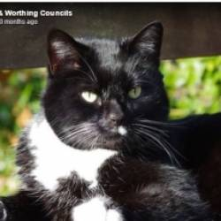 UK: Cat who brought comfort to others has his own cremation