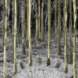 """""""Burial Belt"""" among the trees proposed."""